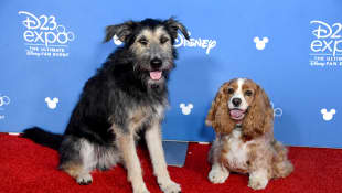 The stars of the 'Lady at the Tramp' Reboot at the Disney D23 Expo in August 2019